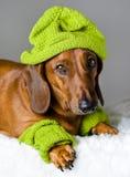 Собака в зеленом шлеме стоковая фотография rf