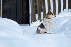 Собака в зиме Стоковые Изображения RF