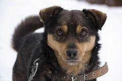 Собака в зиме Стоковая Фотография RF