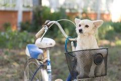 Собака в корзине стоковая фотография