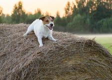 Собака в кормушке Стоковое фото RF