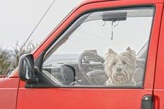 Собака в красном автомобиле Стоковые Изображения RF
