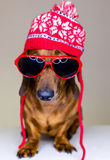 Собака в красных шлеме и стеклах стоковое фото rf