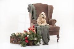 Собака в кресле Стоковые Изображения RF