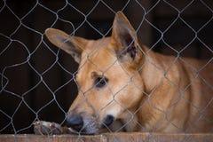 Собака в крупном плане клетки Стоковая Фотография