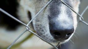 Собака в клетке на приюте для животных сток-видео