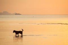 Собака в море Стоковое фото RF