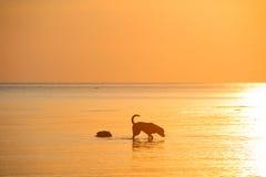 Собака в море Стоковое Изображение