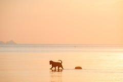 Собака в море Стоковая Фотография RF