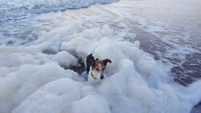 Собака в море стоковое фото