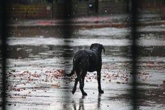 Собака в дожде стоковое изображение rf