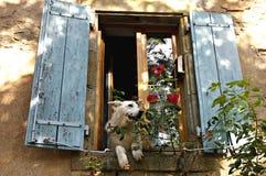 Собака в окне приветствуя соседей стоковые изображения