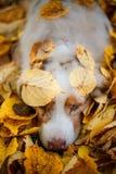 Собака в парке осени Стоковая Фотография