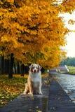 Собака в парке осени Стоковая Фотография RF