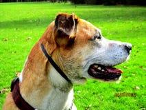 Собака в парке Стоковое фото RF