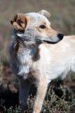 Собака в поле Стоковое Изображение RF