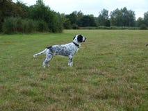 собака в поле Стоковое Фото