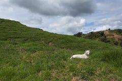 Собака в поле Стоковые Фото
