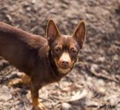 Собака в природе стоковое фото