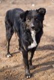 Собака в природе стоковое фото rf
