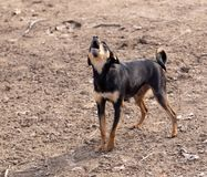 Собака в природе стоковое изображение