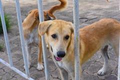 собака в приюте для животных, ждать дом Стоковая Фотография