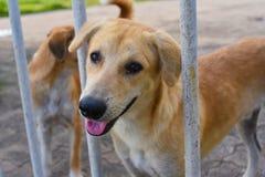 собака в приюте для животных, ждать дом Стоковое Фото