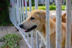 собака в приюте для животных, ждать дом Стоковые Изображения