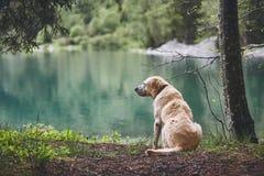 Собака в пуще стоковые фотографии rf