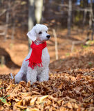 Собака в пуще Стоковые Фото