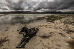Собака в плато, Тибет стоковые фото