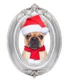 Собака в рамке Стоковая Фотография RF