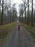 Собака в древесинах Стоковые Фото