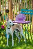 Собака в саде стоковые фотографии rf