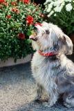 Собака в саде Стоковые Изображения