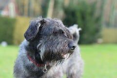 Собака в саде Стоковая Фотография