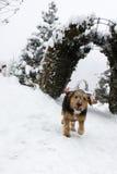 Собака в снеге зимы Стоковое Изображение RF