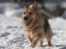Собака в снежке Стоковое Изображение