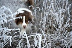 Собака в снежке стоковые изображения rf