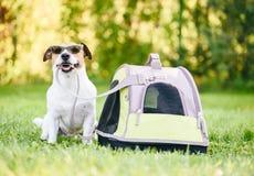 Собака в солнечных очках сидя рядом с его tote готовым для того чтобы пойти для перемещения каникул стоковые изображения rf
