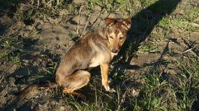 Собака в солнечности стоковые фотографии rf