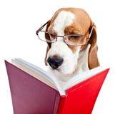 Собака в стеклах читает Красную книгу стоковое изображение rf