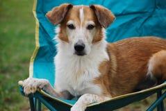 Собака в стуле бирюзы стоковые фотографии rf