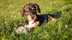 Собака в траве Стоковое Фото