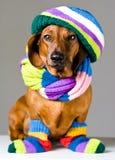 Собака в цветастом шлеме стоковое изображение rf