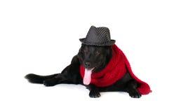Собака в шляпе и шумоглушителе моды стоковые изображения rf