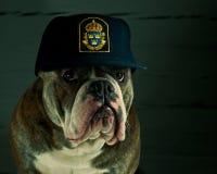 Собака в шляпе полиции стоковое фото