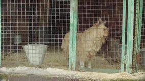 Собака в aviary в укрытии собаки сток-видео