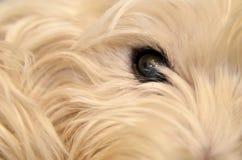 Собака глаза конец вверх Стоковое фото RF