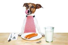 собака голодная Стоковые Изображения